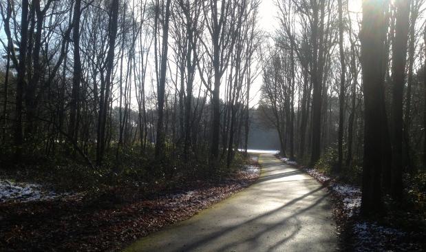 De bossen in onze achtertuin, idyllisch en mystiek.